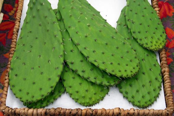 how to cook prickly pear cactus pads